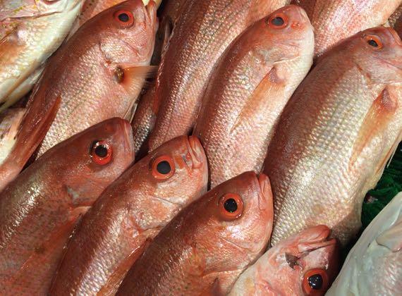 Fish rosy