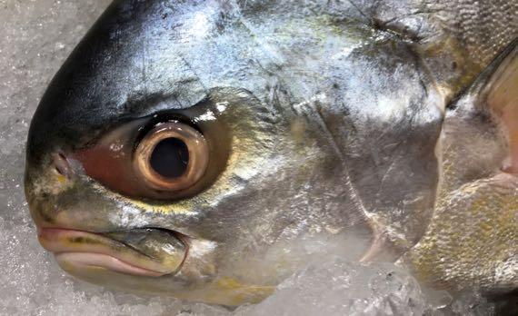 Fishface WF