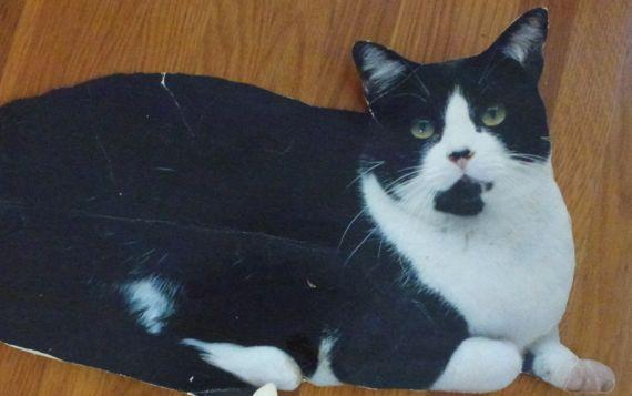 Flat cat tintin
