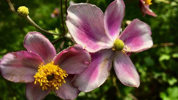 Fleur pw