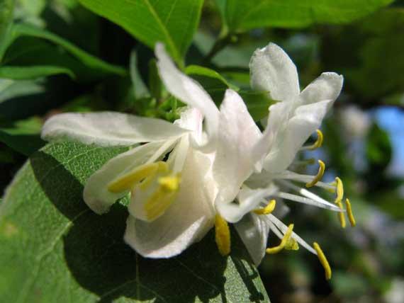 fleurs_2_yrs_ago.jpg