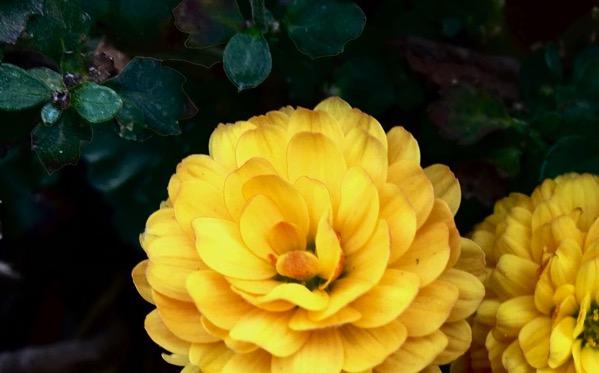 Flower artsy