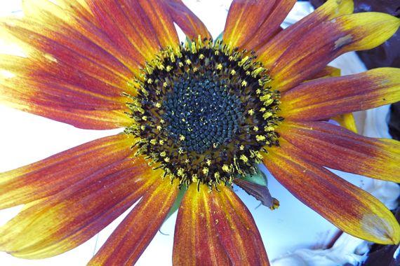 flower_from_GM_wedding_cake.jpg