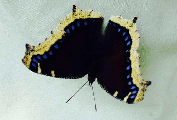 Flutterby upside