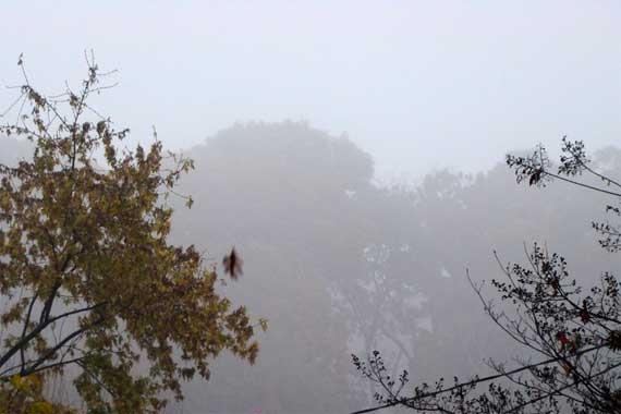 foggy_street.jpg