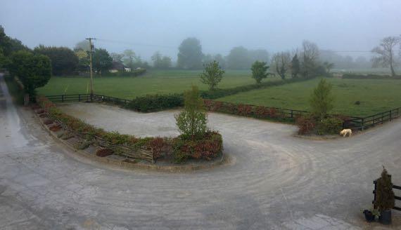Foggy morn dog patrol