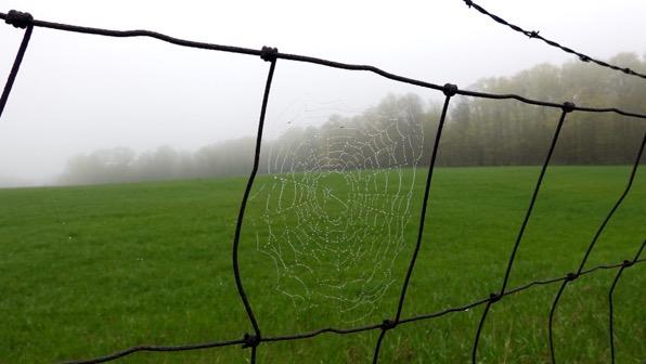 Foggy morn spiderweb
