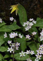 Forest floor spring bounty flowers
