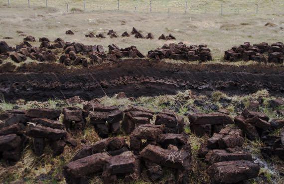 Fresh cut peat