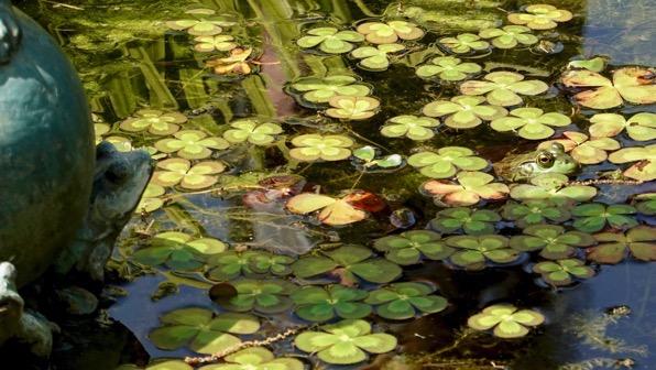 Frog eyeing frog statue