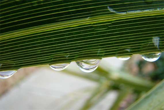 frond_droplets_CU.jpg