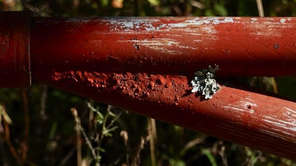 Gate lichen