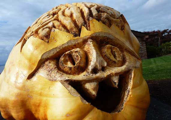giant_pumpkin_brain.jpg