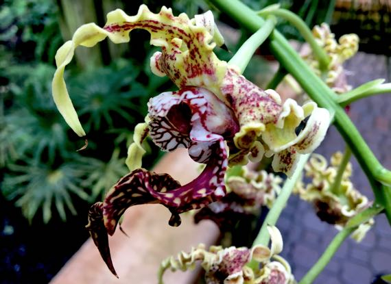 Gnarly orchid