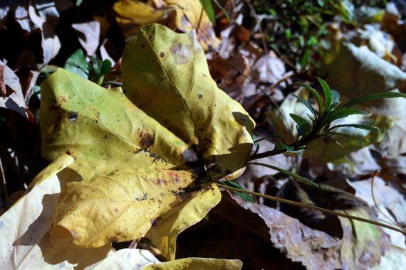 Gold green autumn
