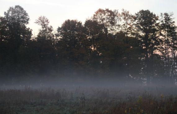 Ground fog in morn