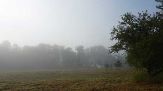 groundfog_in_field.jpg