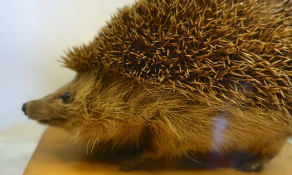 Hedgehog stuffed