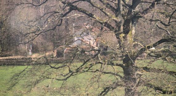 Hopping tree