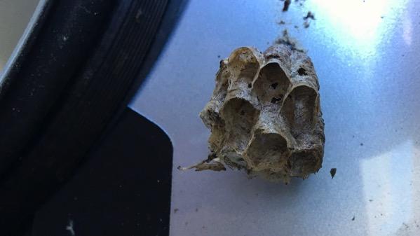 Hornets nest small