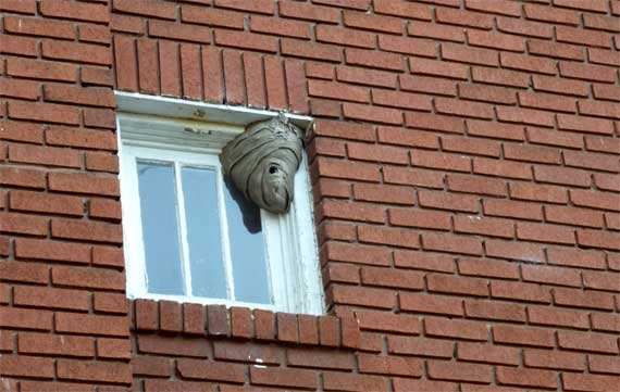 hornets_nest_window.jpg