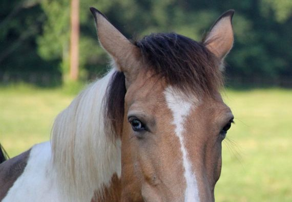 Horse cropped for eyes