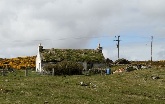 House sod roof