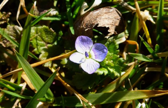 Itty bitty weed flower of spring