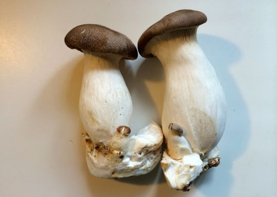 King oyster mushroom duo