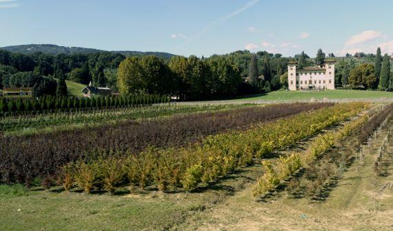 Landscaping yard villa