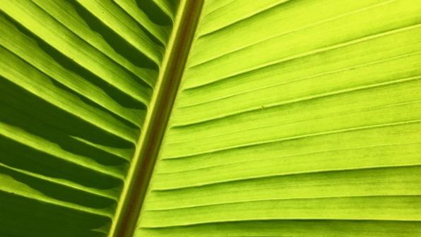 Leaf CU