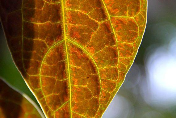 Leaf backlit ABG conservatory