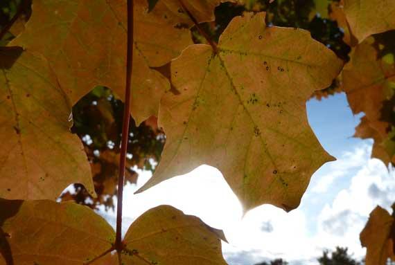 leaf_light_interplay.jpg