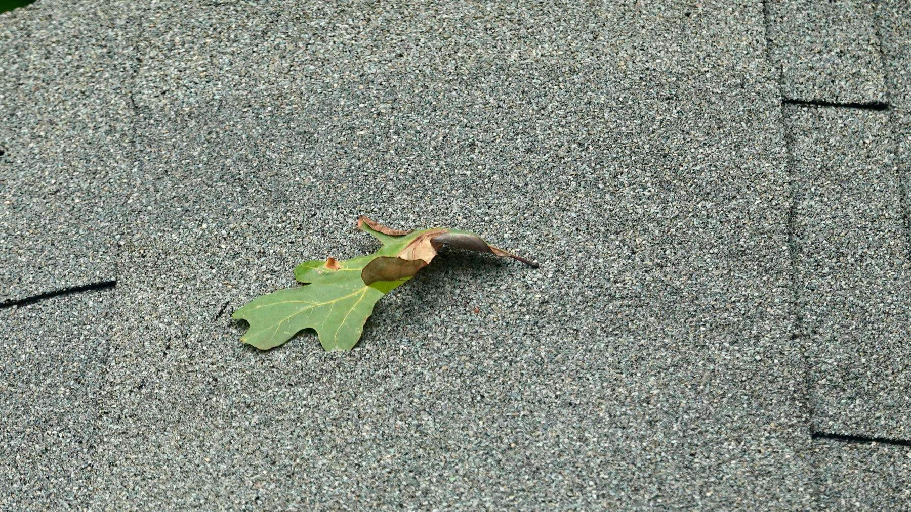 Leaf roof
