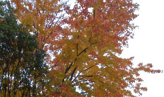 leaves_remaining.jpg