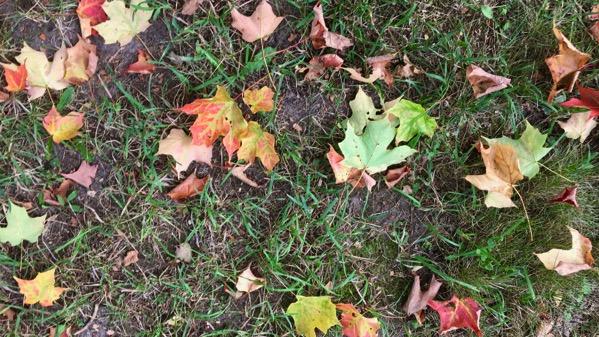 Leaves aground