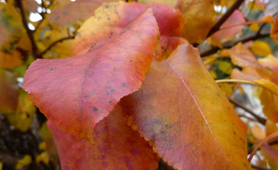 leaves_autumn_late_color.jpg