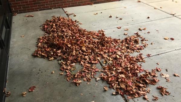 Leaves congregating