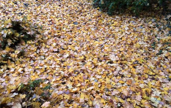 Leaves yellowgold carpet