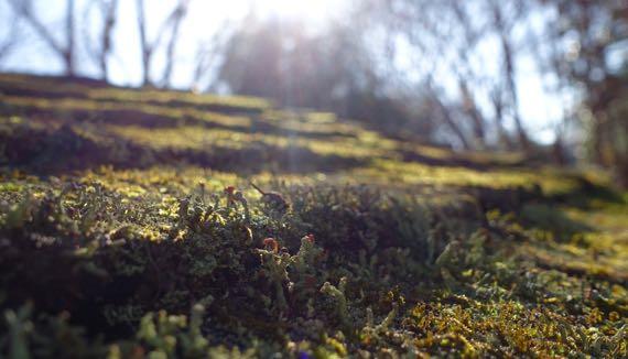 Lichen roof Japanese garden
