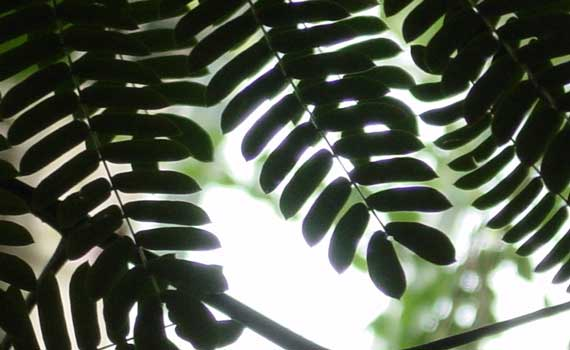 light_shadow_leaves.jpg