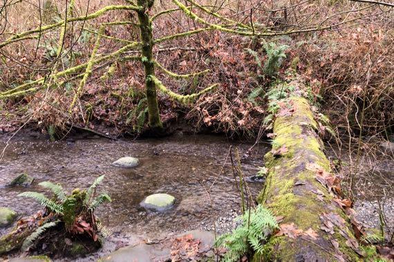 Log creek