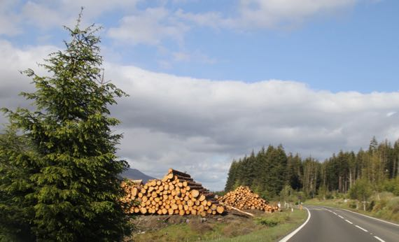 Logging Scotland