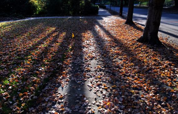 Low sun on down leaves