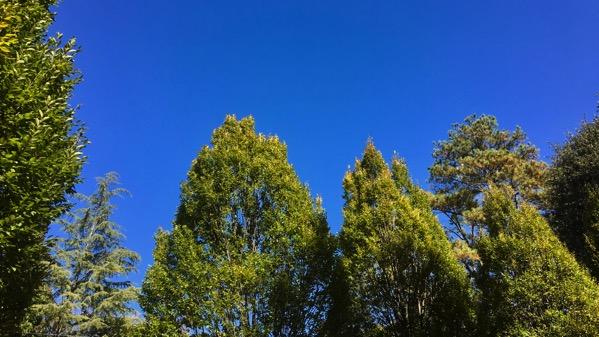 Many trees sky