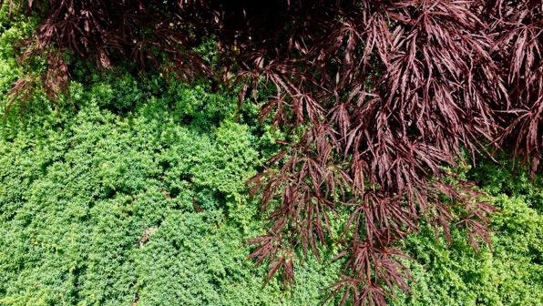Maple juniper pattern