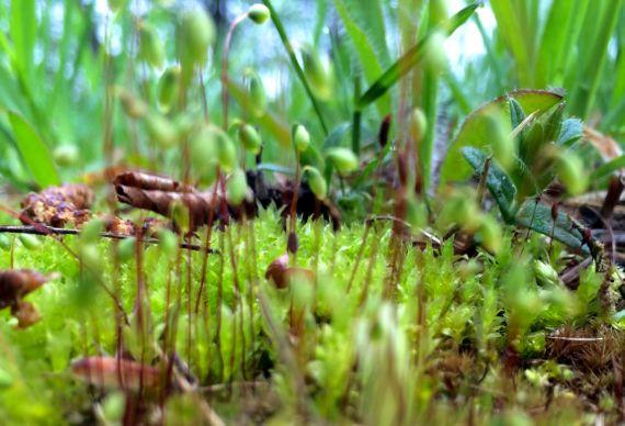 Micro mossy world