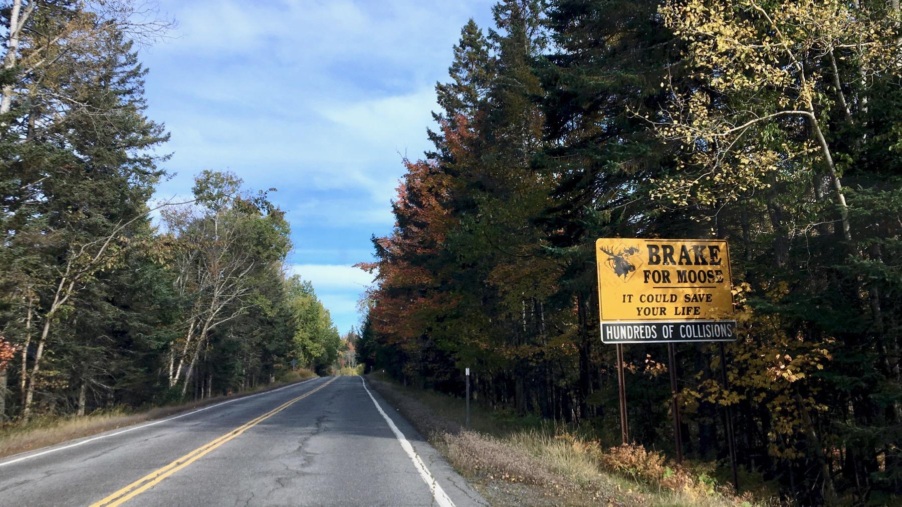 Moose signage