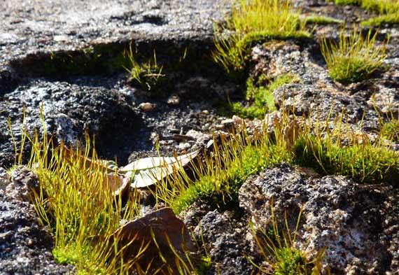 moss_greening_in_winter.jpg