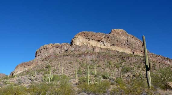 mountain_xeric_cactus.jpg